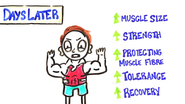 body quickly increases muscle size and strength