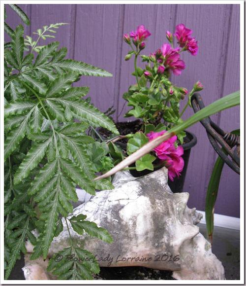 04-29-purp-geranium