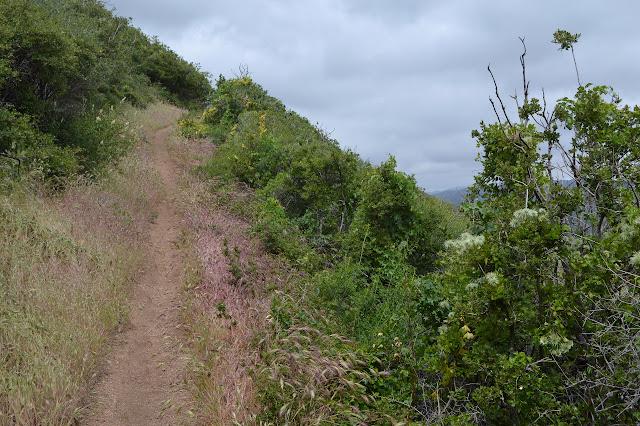 dirt track ahead