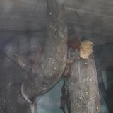 Zoo Snooze 2015 - IMG_7317.JPG