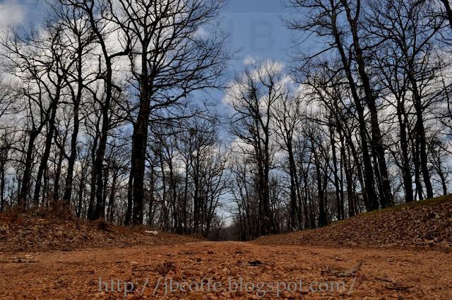 foloi+forest