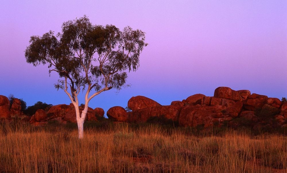 ghost-gums-4