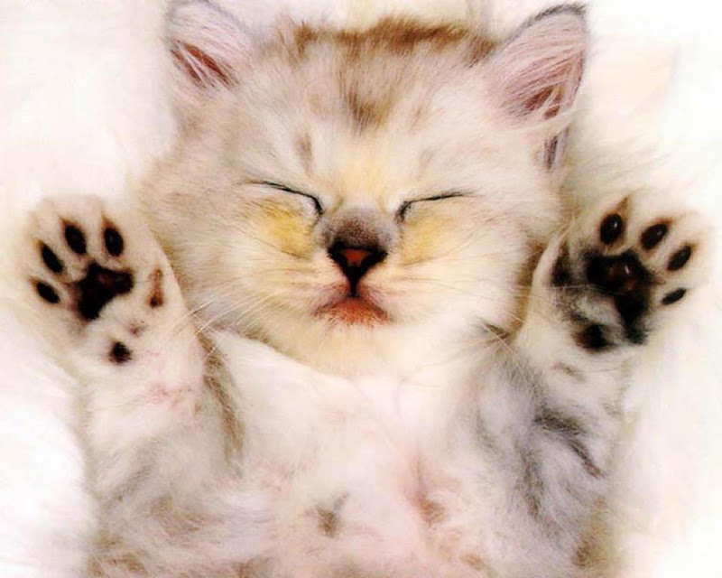 kucing unyu-unyu gambar unyu-unyu terbaru gambar lucu anak kucing