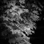 Fall in MI, 09 (91 of 122)dng.jpg