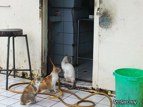 Cats (SE Vivaz)