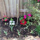 Gardening 2011 - 100_7003.JPG