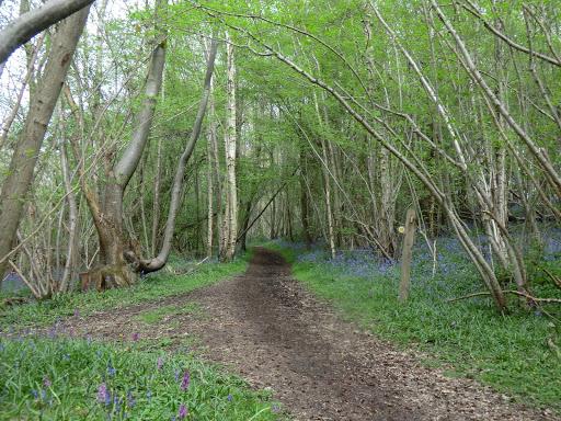 CIMG6367 Woodland path near Crippenden Manor
