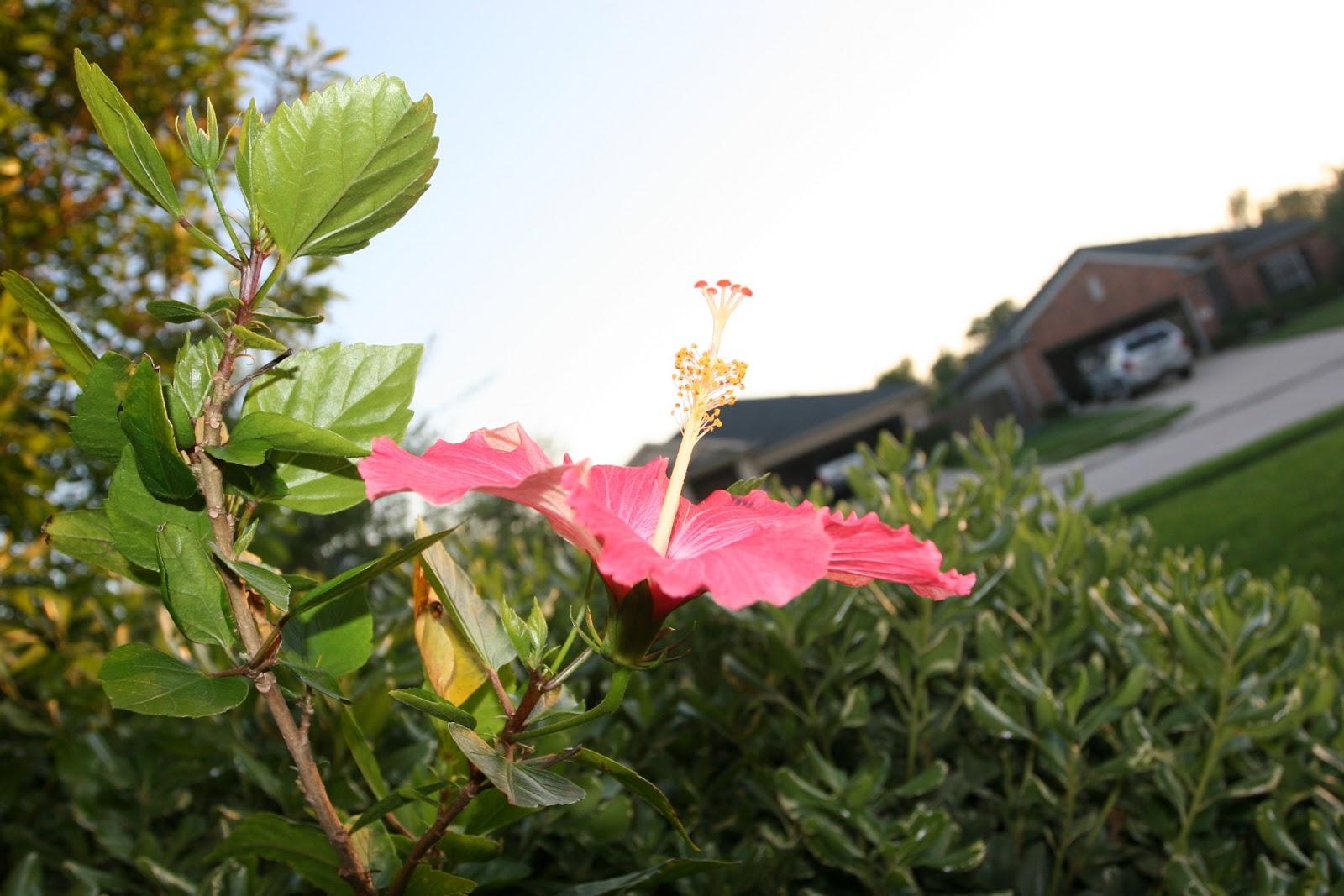 Gardening 2012 - IMG_2698.JPG