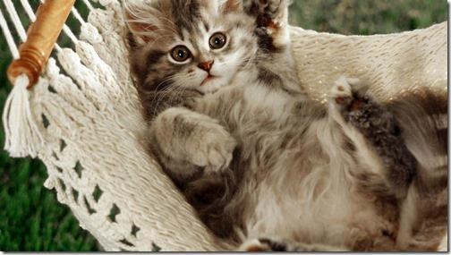 22 fotos de gats (16)