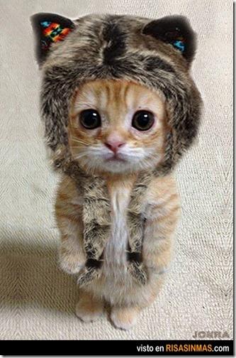 humor gatos (3)