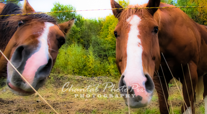 Photo: Here's to looking at YOU...  Photo taken while vacationing in the Eastern Townships in Canada.