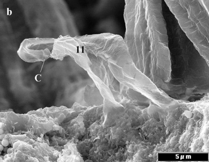 nasa found alien bacteria by - photo #9