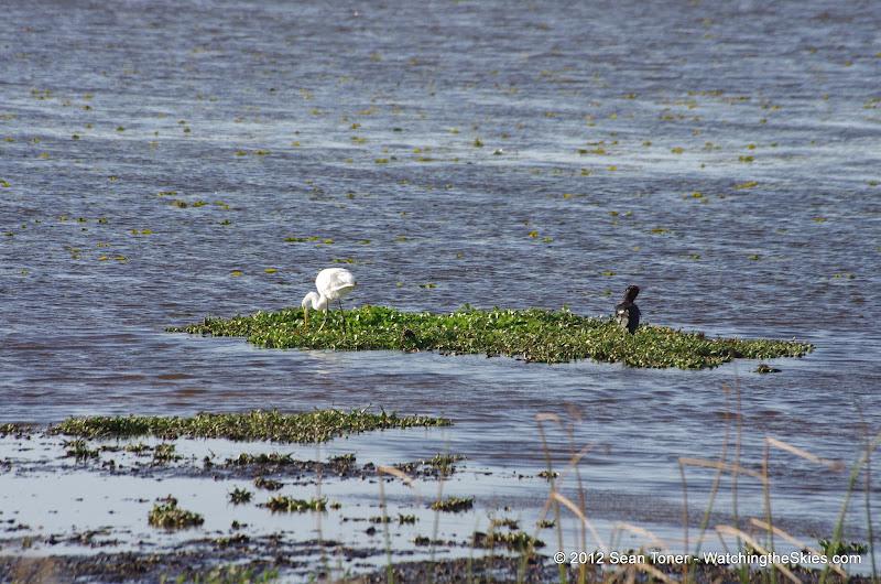 04-06-12 Myaka River State Park - IMGP9906.JPG