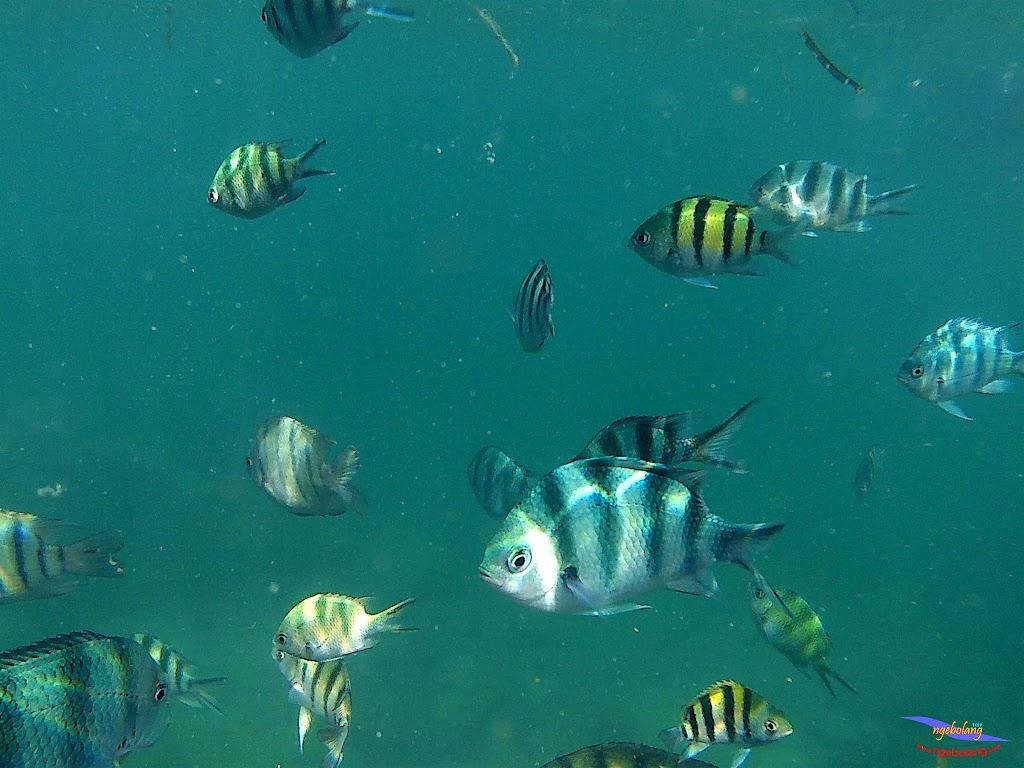 family trip pulau pari 140716 GoPro 47