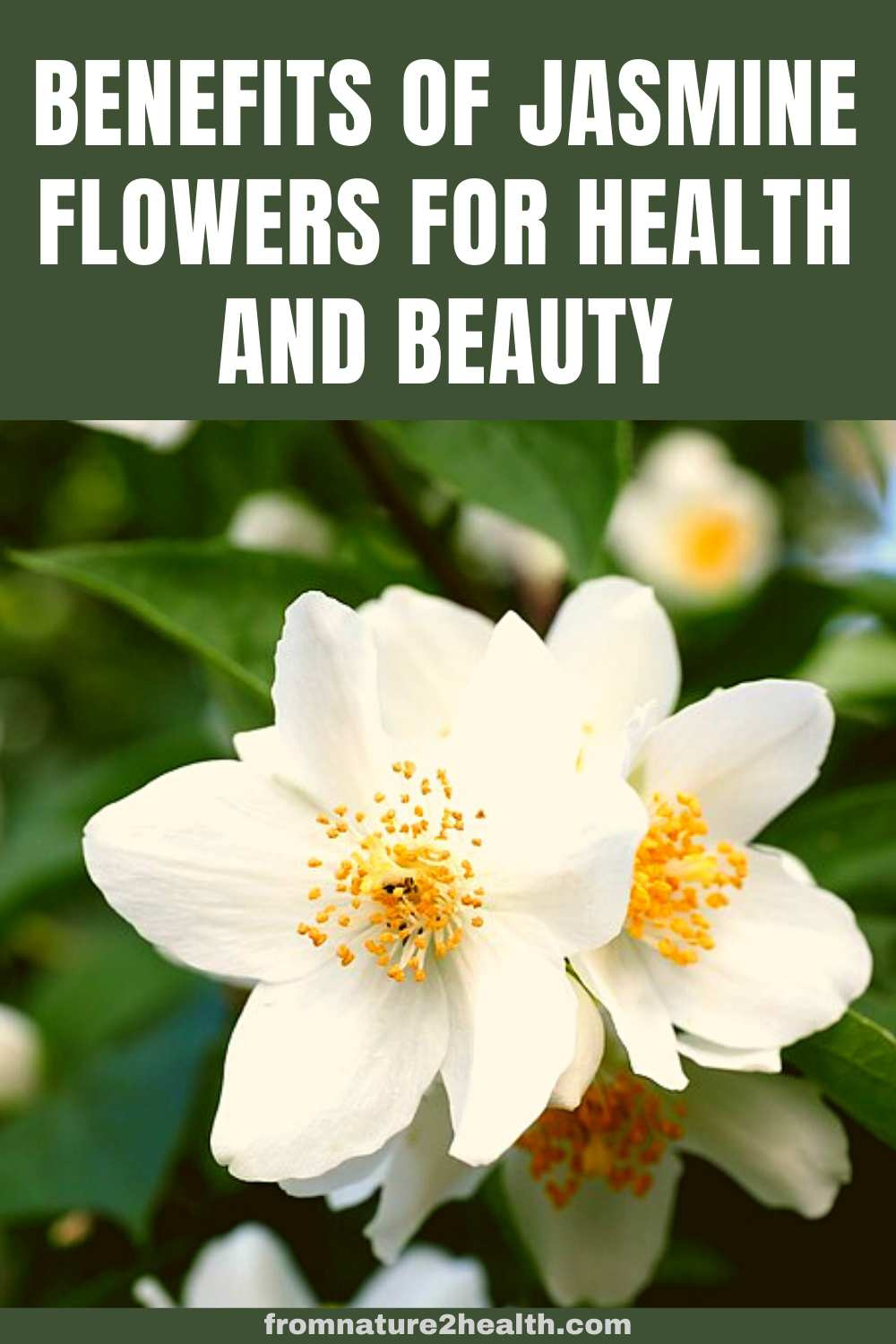 Benefits of Jasmine Flowers for Health and Beauty