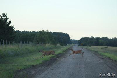Deer July 22