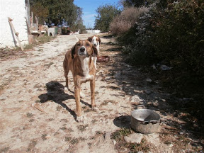 Other Ways We Help - Sterilizations March/April