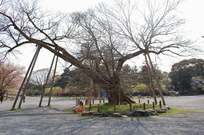 2014 Japan - Dag 10 - jordi-DSC_0879.JPG