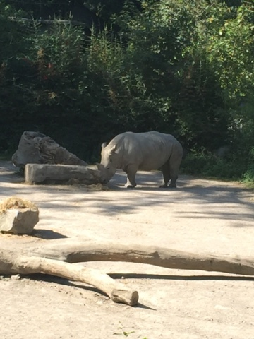 Zoo de Lille rhinocéros