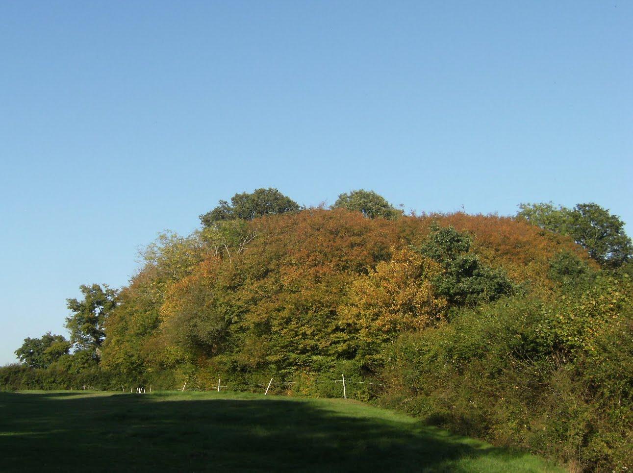 DSCF9878 Early autumn colours