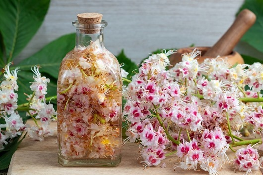 Preparation of herbal tincture from horse chestnut blossoms
