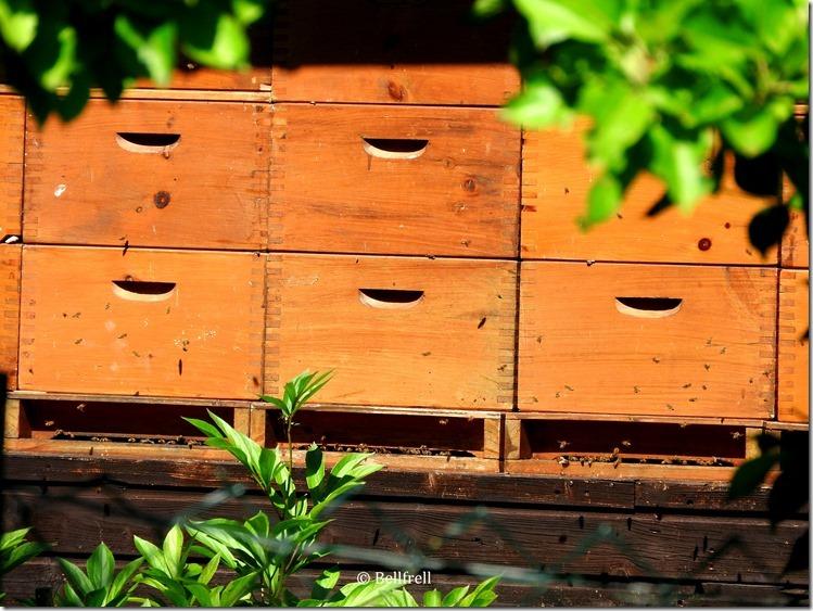 Bienenkobel 1