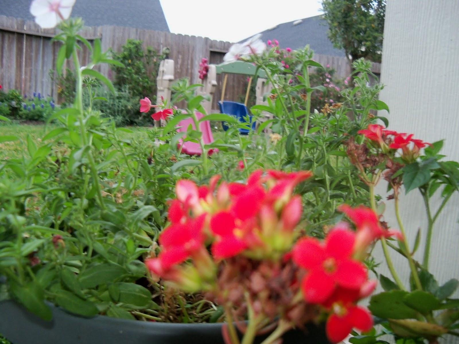 Gardening 2013 - 115_5655.JPG