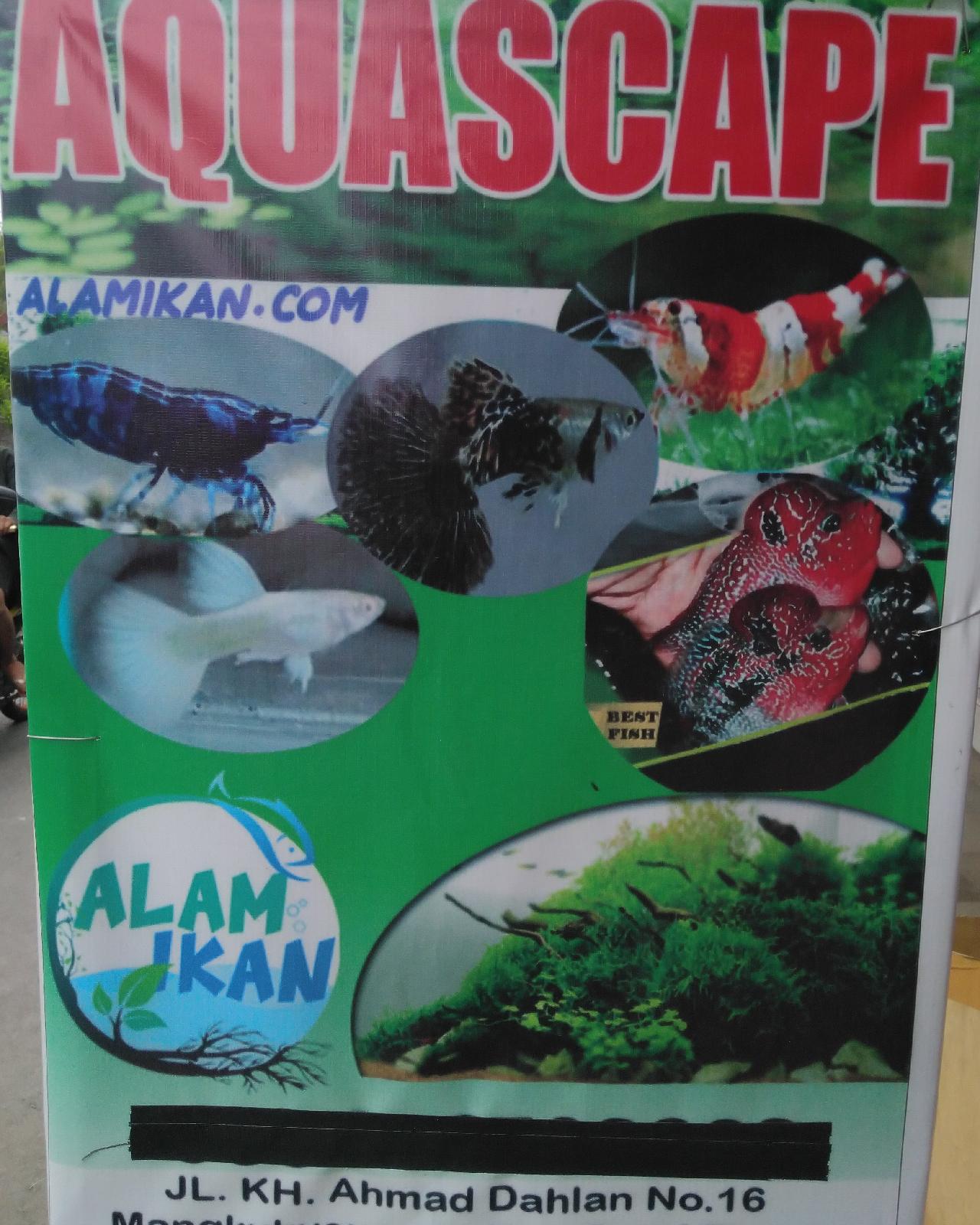 Aquascape Batu Kali : aquascape, Ikan:, Aquascape