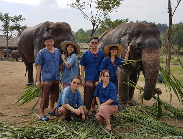 get up close and personal with elephants at Lanna Kingdom Elephant Sanctuary