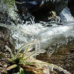 Icy plants beside Sawpit Creek falls in Kosciuszko National Park (297584)