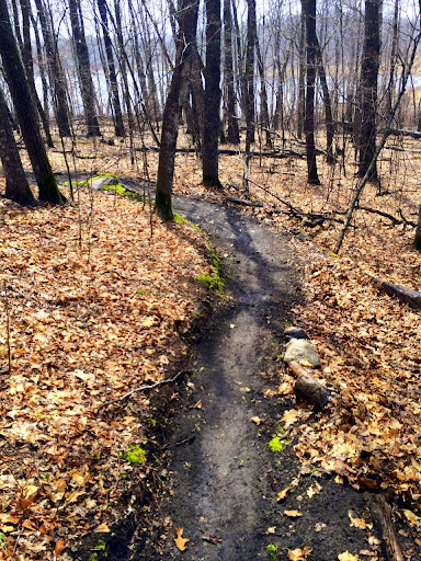 Twin Lakes singletrack cleared Thursday afternoon