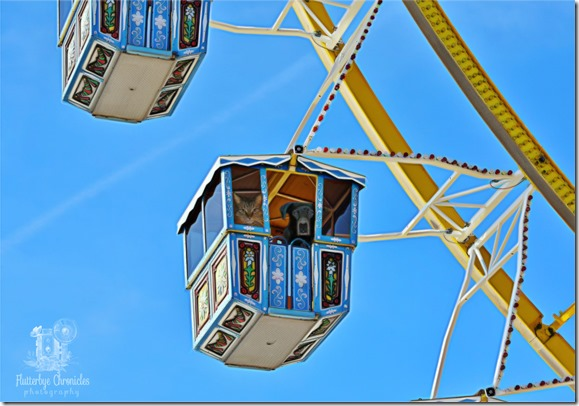 Matt & Matilda on Ferris Wheel (©Jenny @ Flutterbye Chronicles)