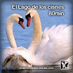 El Lago de los cisnes 80min