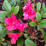 Gardening 2010 - 101_0540.JPG