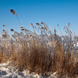 Winter - Winter-044.jpg