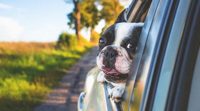Confira 4 dicas importantes para ter uma viagem tranquila junto ao seu amigo pet