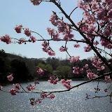 20100327_三ツ池公園