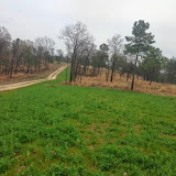 Anderson Creek Hunting Habitat - photo.JPG