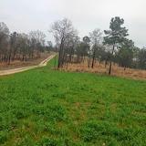 Anderson Creek Hunting Habitat - photo.JPG
