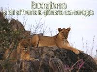 buongiorno buon giorno immagine con frase aforismo a chi affronta la gioranta con coraggio leone.jpg