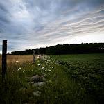 LacieMeier-Farm Living.jpg
