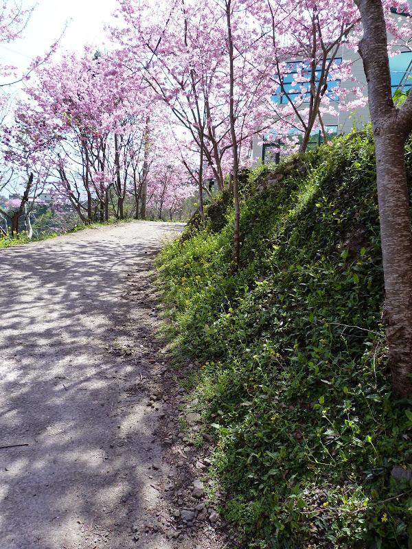 TAIWAN Chia yi, Taichung et quelque part ? au  au sud de Taipei - P1000346.JPG