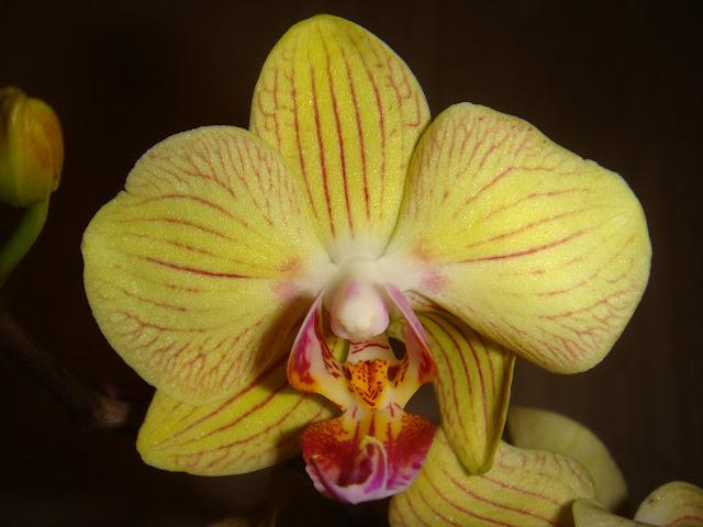 продам орхидеи и не только DSC05345