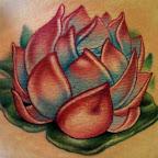 lotus1-14.jpg