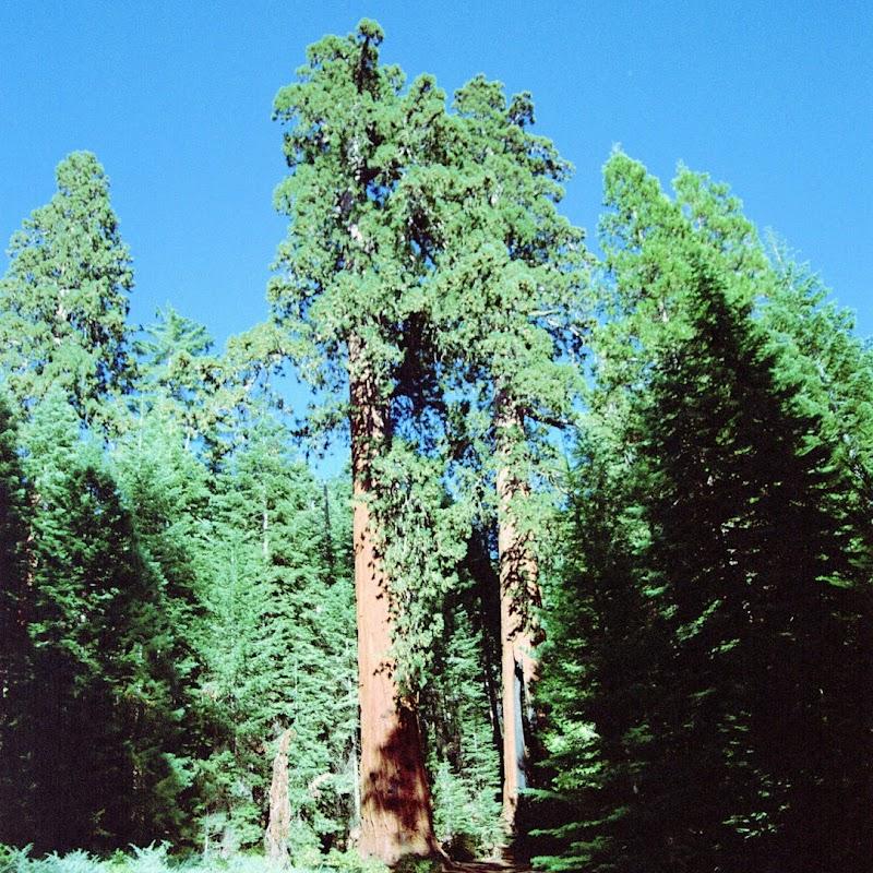 Yosemite_30.jpg