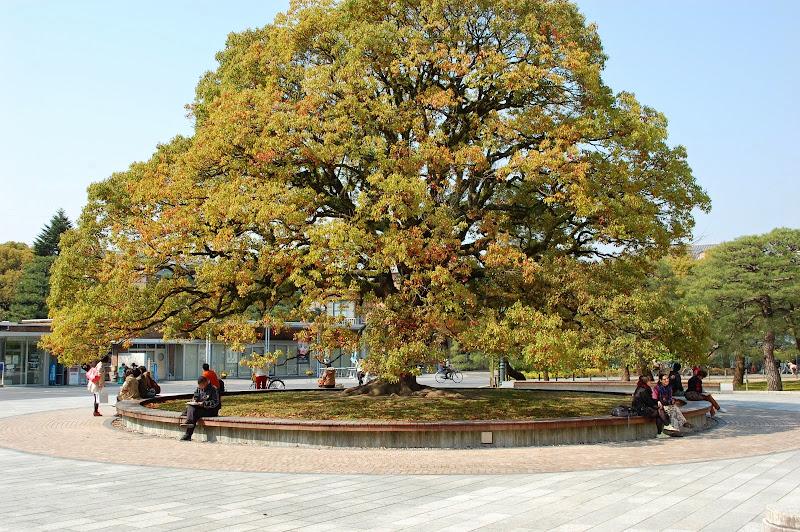 2014 Japan - Dag 10 - jordi-DSC_0814.JPG