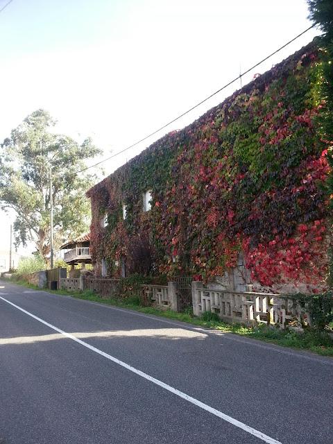 Casa con la fachada cubierta por enredaderas
