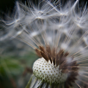 by Metka Hiti - Nature Up Close Flowers - 2011-2013