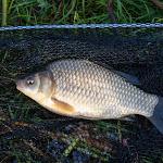20140510_Fishing_Stara_Moshchanytsia_009.jpg