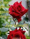 fleur-rose.png